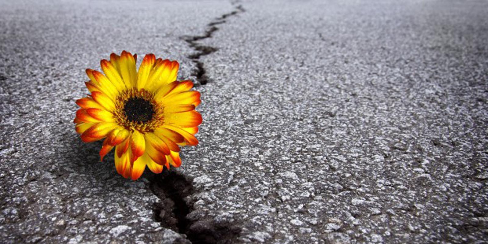 Adapting After Adversity